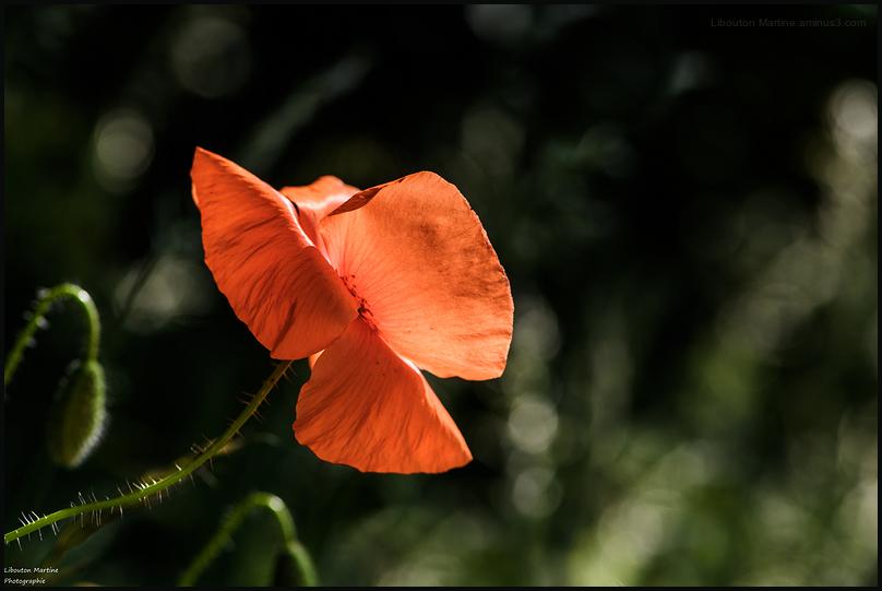 La beauté est une fleur éphémère !