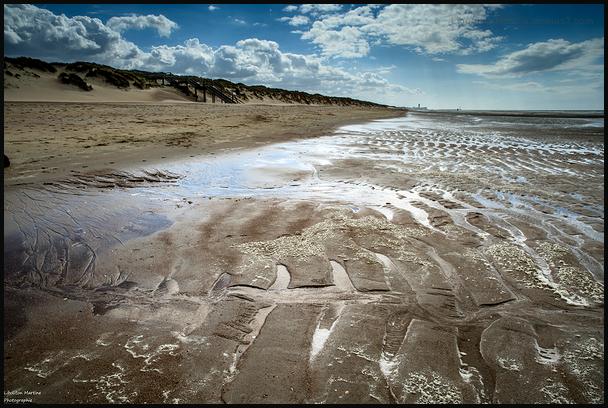 Le fossile de la plage !