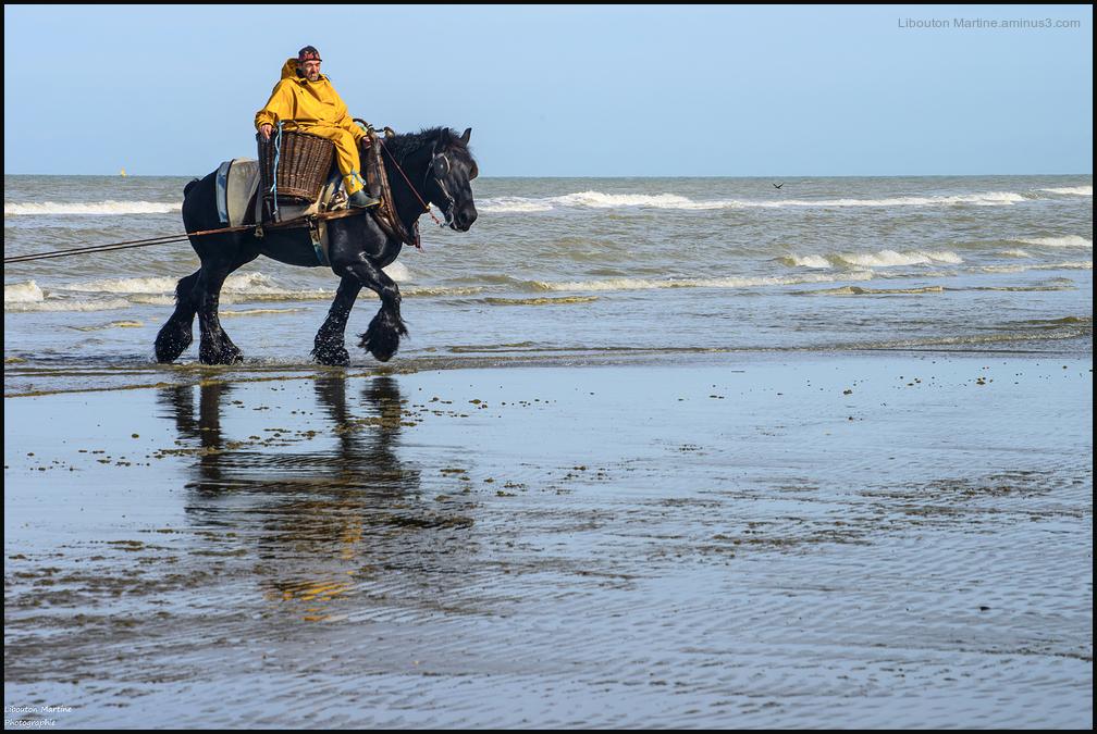 Le pêcheur de crevettes à cheval 1