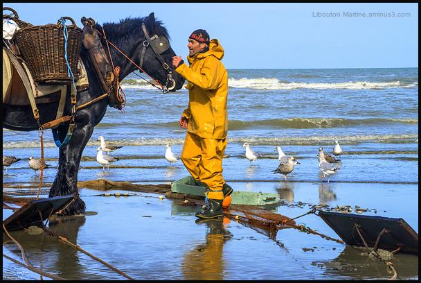 Le pêcheur de crevettes à cheval 2