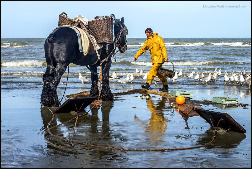 Le pêcheur de crevettes à cheval 4