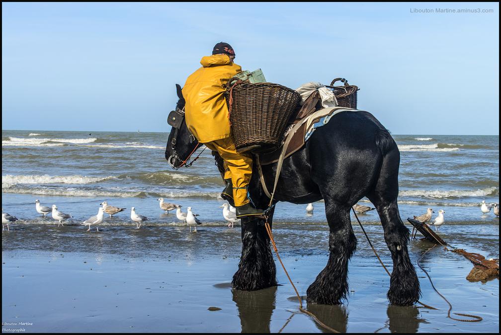 Le pêcheur de crevettes à cheval 5