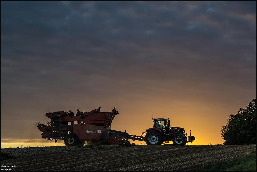 nature patates tracteur coucher soleil