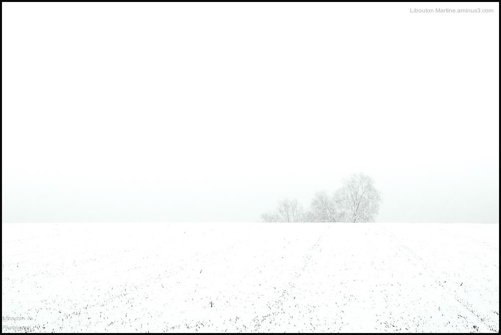 White  ...