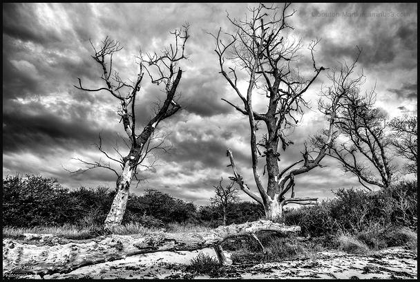 Tous les arbres ont senti la force du vent !