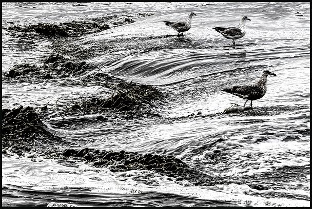 Les goélands du bord de mer 2