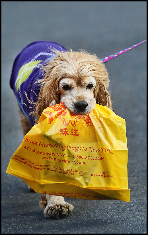 Dog Courier