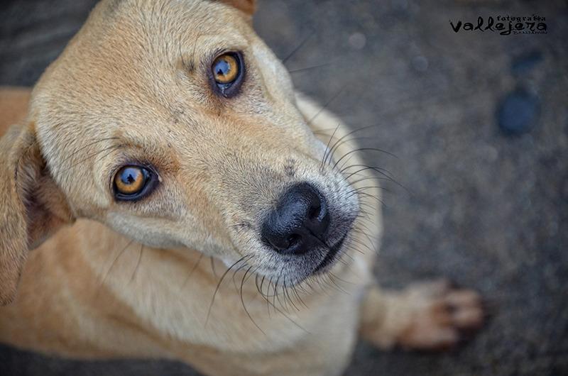 Askal (street dog) - Animal & Insect Photos - Benjamin