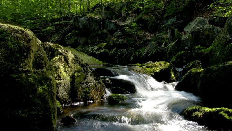Černý potok (Black brook)