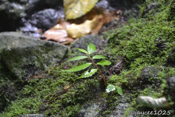 plant, nature, green