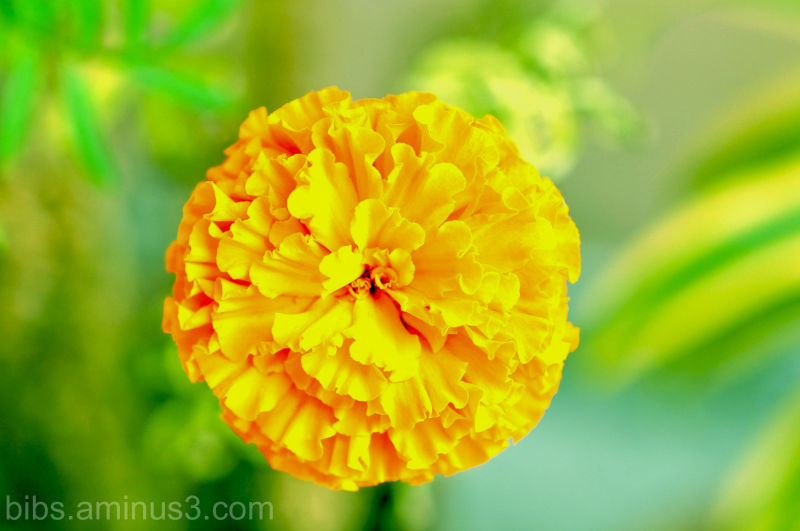 Floral..