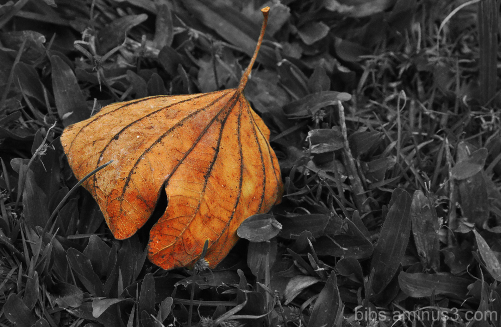 The Leaf..