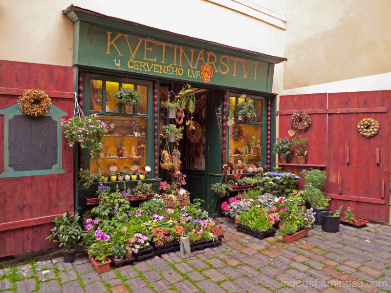 Little florist's shop