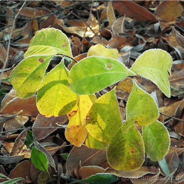 Green vs. dry
