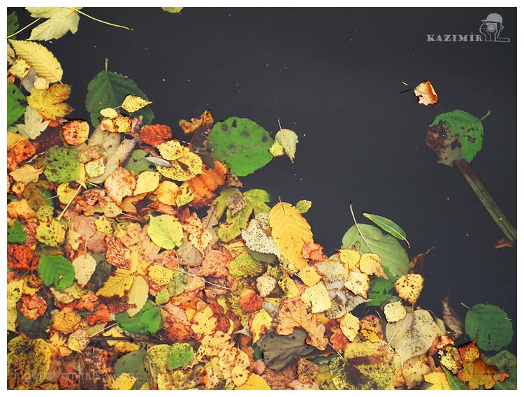 Black water (autumn reminiscenses)