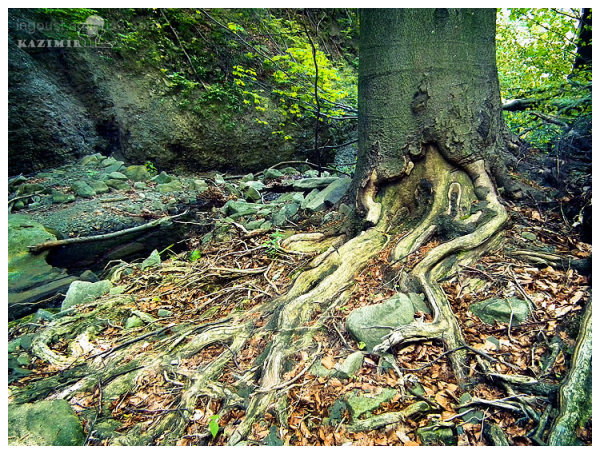 Scraped roots