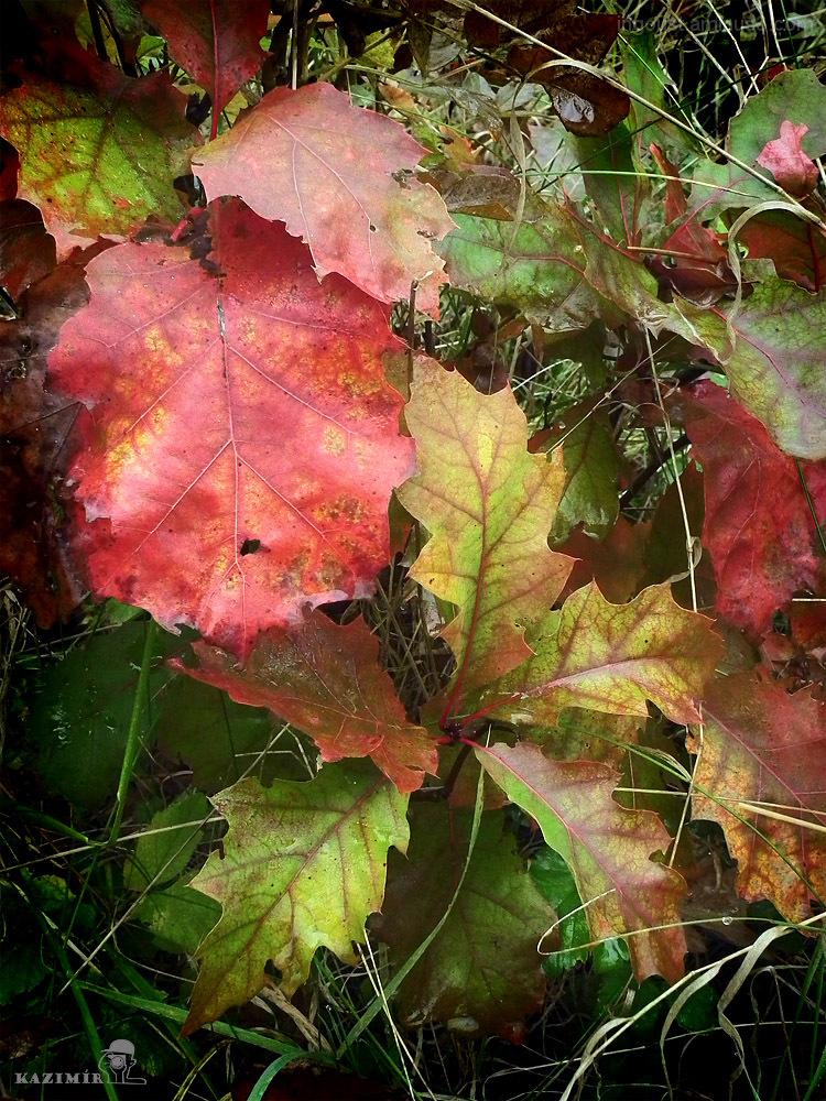 Autumn IV.