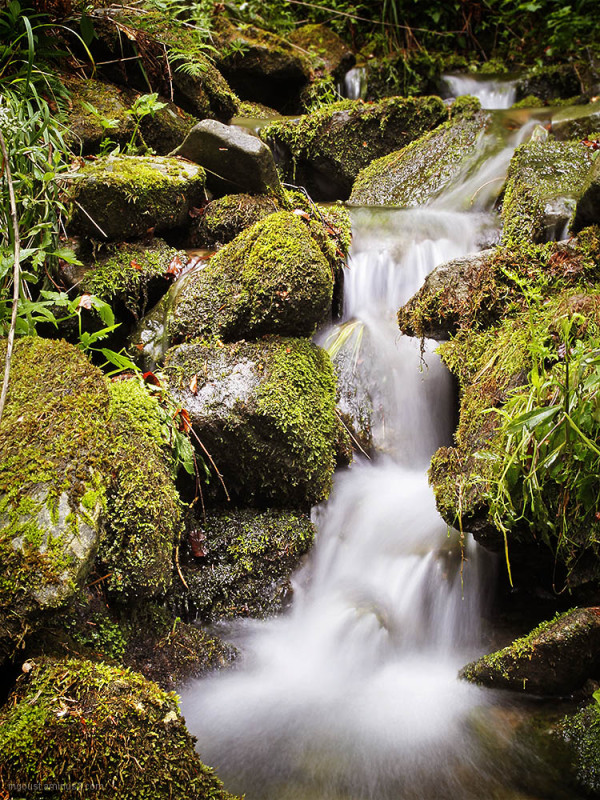 Mountain stream II