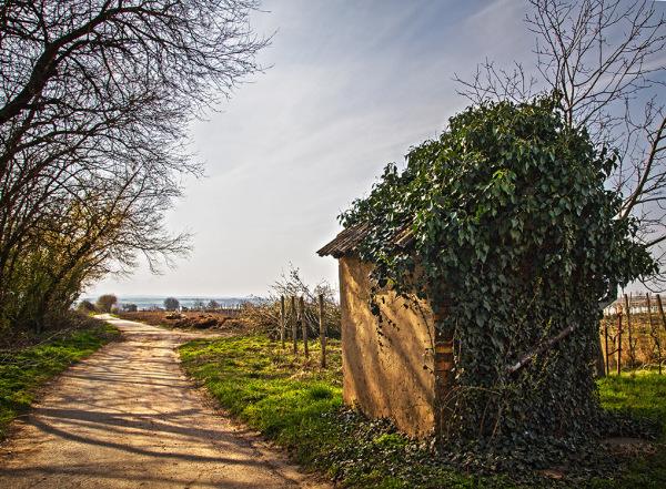 Spring in vineyard 2