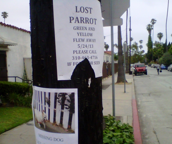 missing pet signs