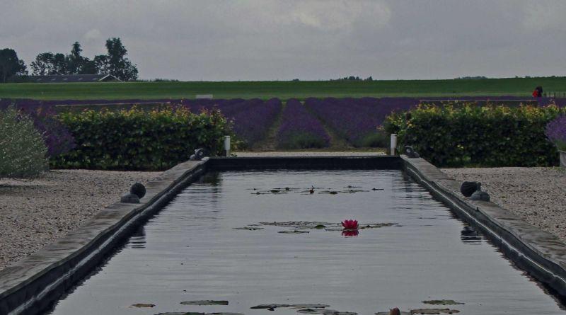 Lavendelveld in Marknesse