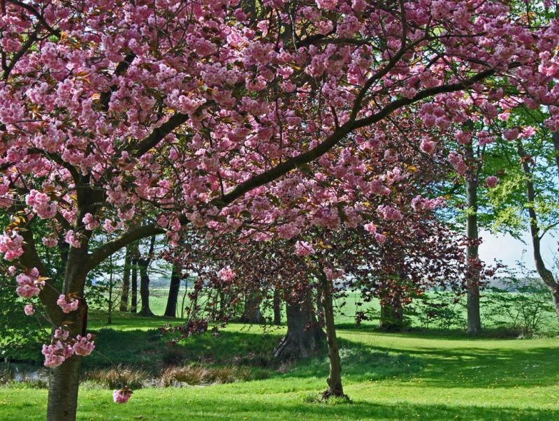 Voorjaars kleuren