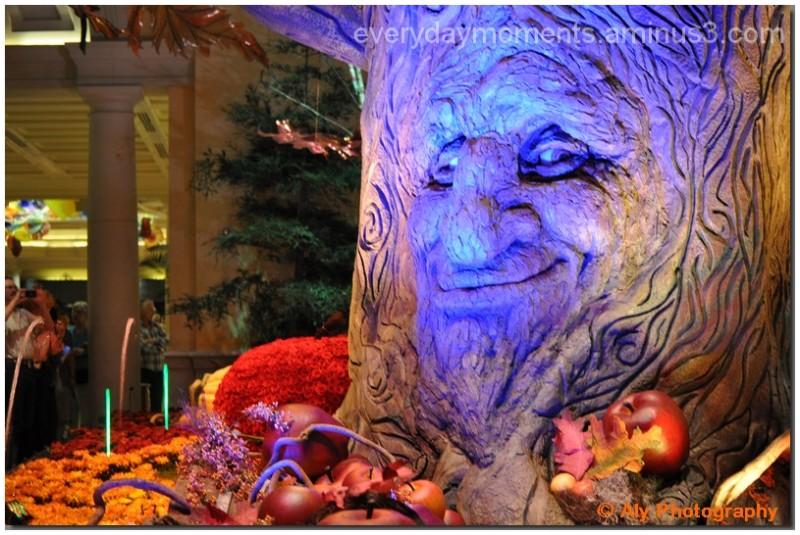 The tree smiles