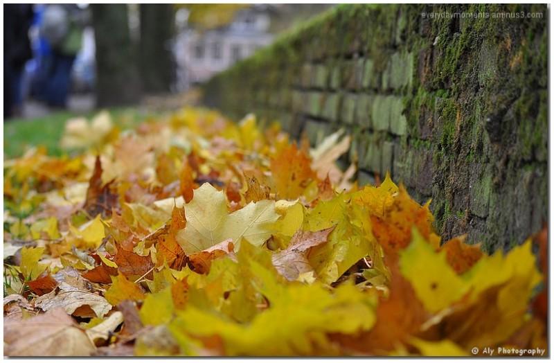 Nikon D5000,herfstbladeren,november,