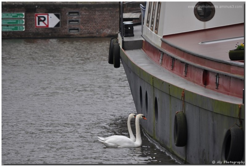 Groningen,zwanen,Nikon D5000