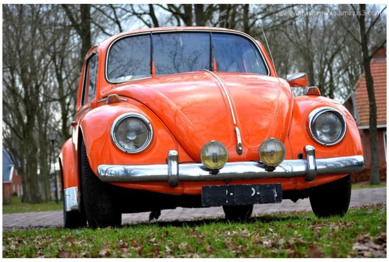 oranje, oldy, Nikon D5000