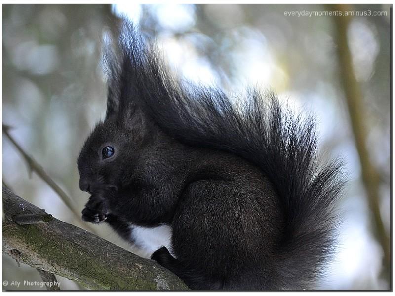 eekhoorn,squirrel, Nikon D5000