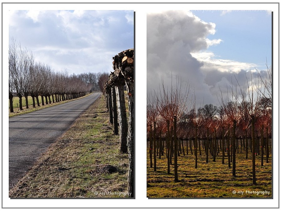 snoeien , jonge bomen, Nikon D5000,drente