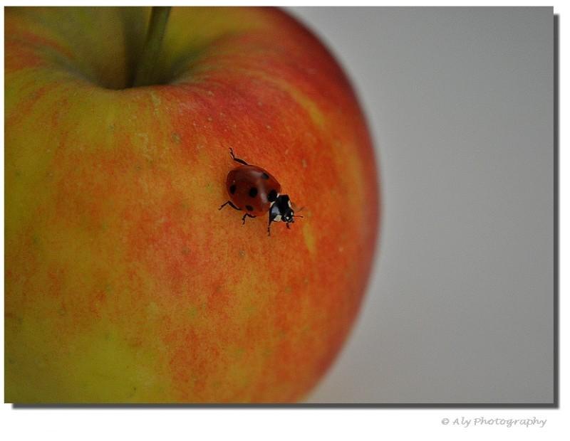 appel, lieveheers beestje