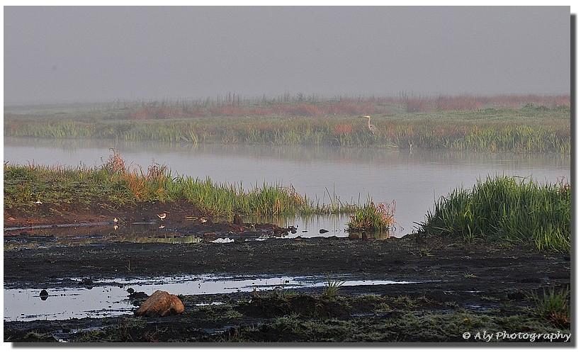 Natuur,misty morning