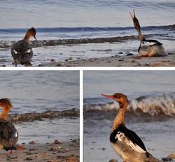 Vogels aan de oostzee