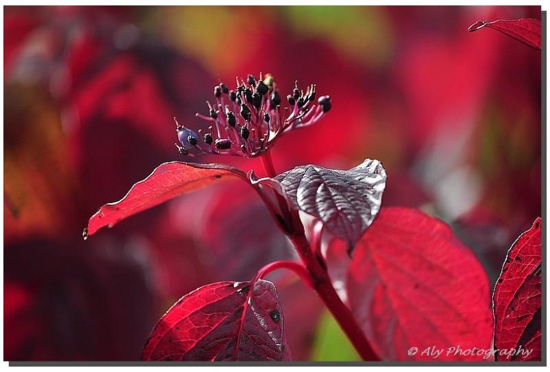 herfst rood