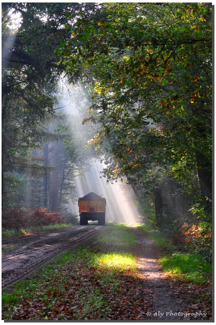 Fietser,mist,zonnestralen.bos