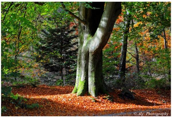 Zonlicht,bos,herfst,Nikon D5000