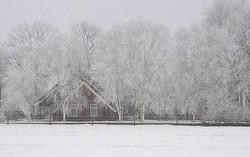 frosty world