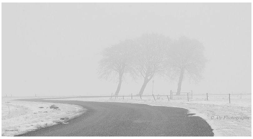 Drie ,bomen ,rij winter,nevel,vorst,rijp,2013