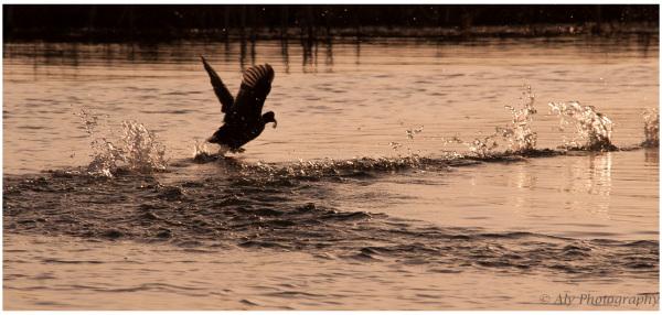 racing across the water