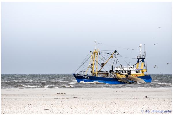 fish for the coastline