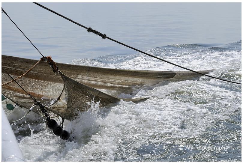 shrimp fishing