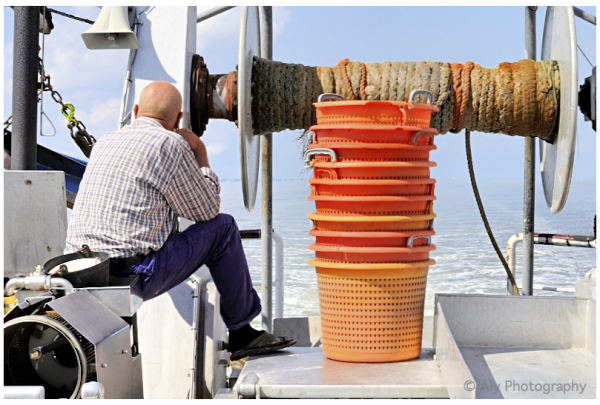 Wachten , garnalen vissen , op het wad