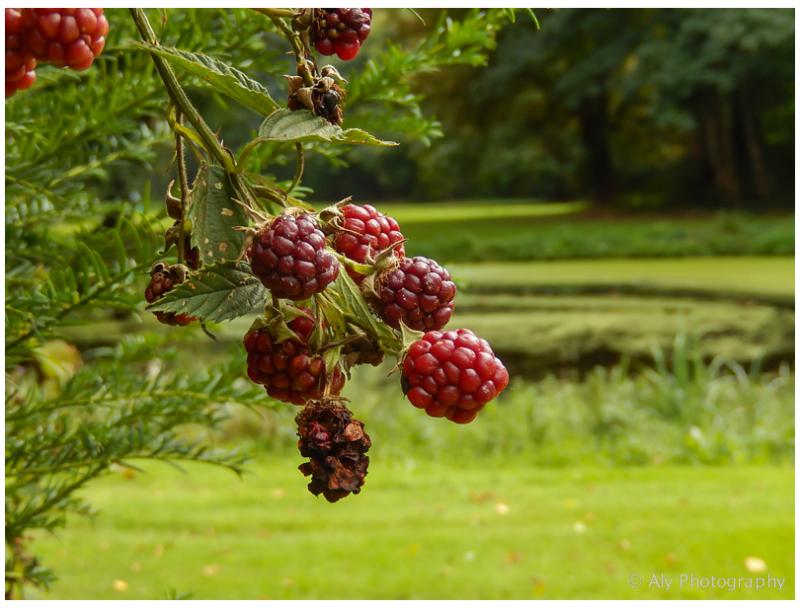 Fraeylemaborg  garden