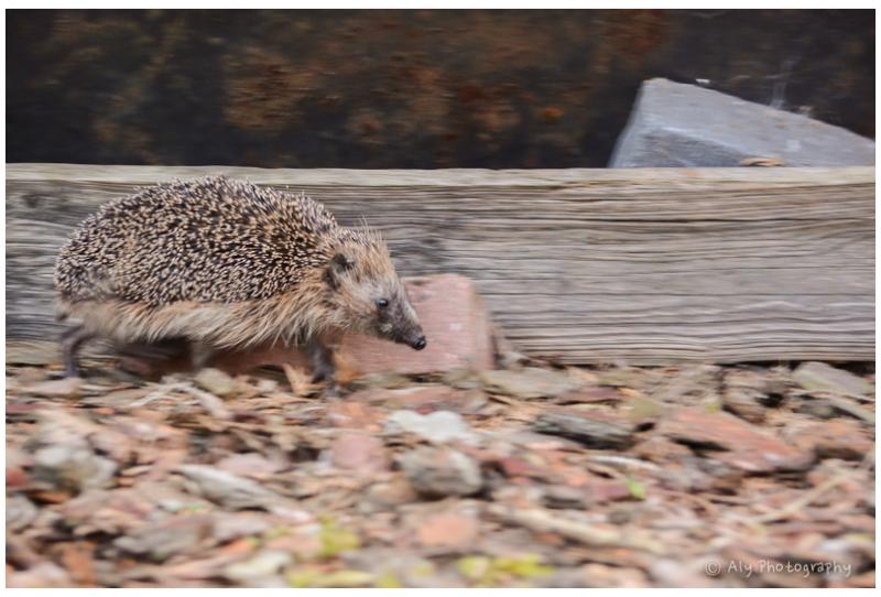 Wildlife in our garden