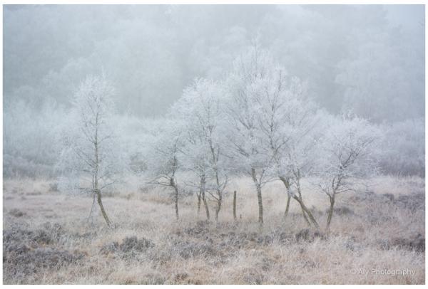 Landschap. rijp ijs, Drente,koud mooi