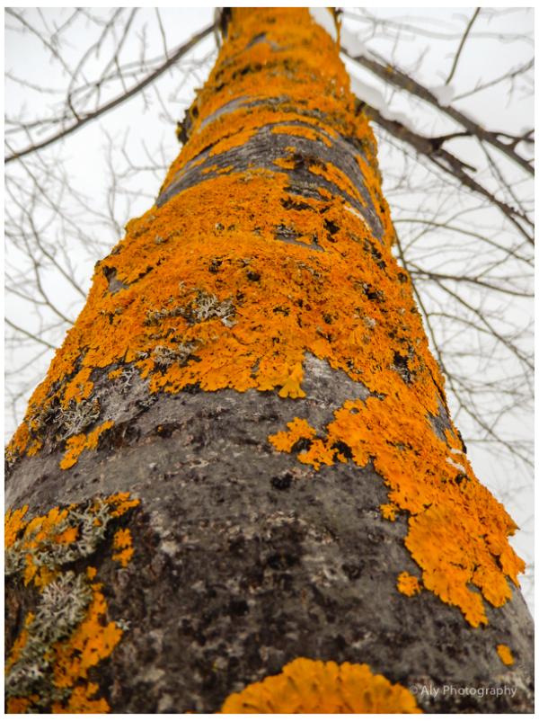 colored fungi