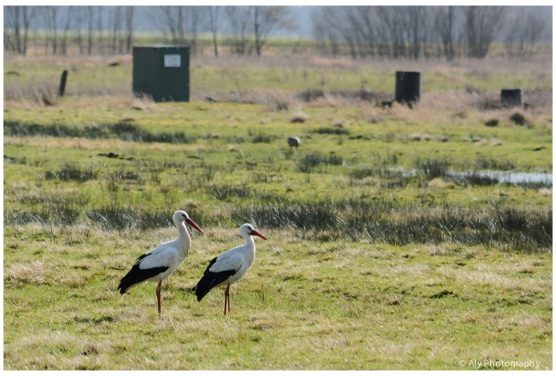 couple storks are back