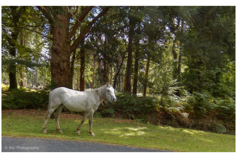 Wild in new forest in southern England